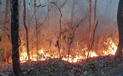 Fire Prevention in Doi Suthep-Pui National Park