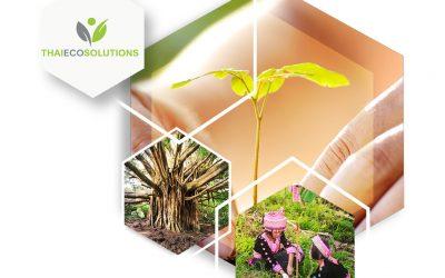 Tree Planting in Doi Suthep-Pui National Park