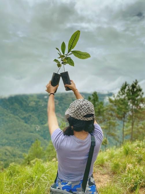 Planting Trees on Doi Hua Moo