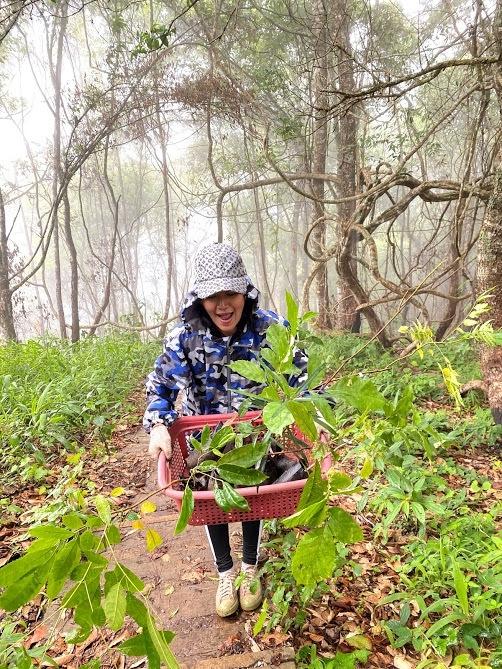 Doi Pui Tree Planting