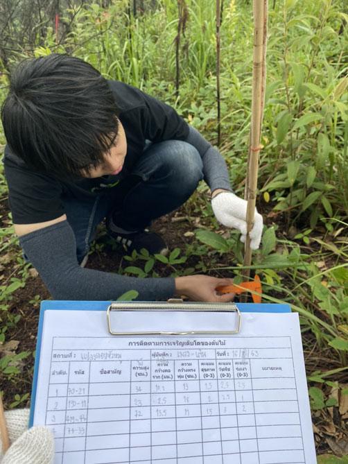 tree study Chiang Mai
